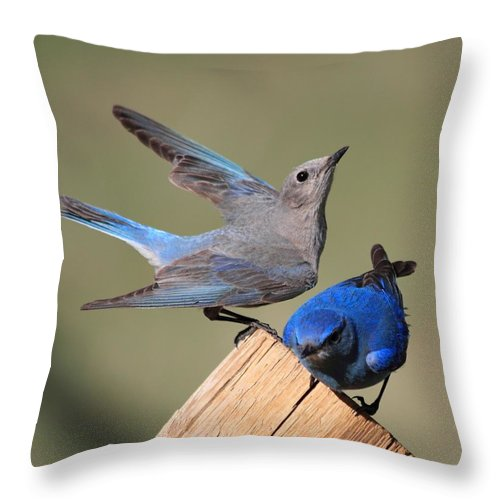 Blue Birds Throw Pillow featuring the photograph A Great Pair by Shane Bechler
