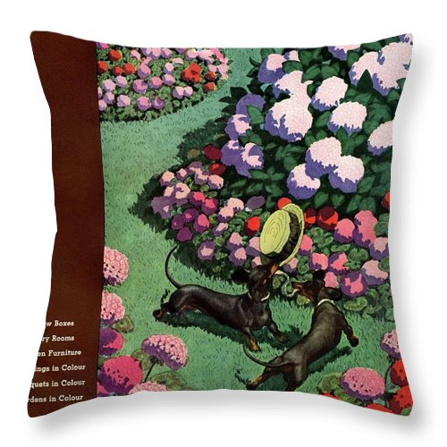 Illustration Throw Pillow featuring the photograph A House And Garden Cover Of Dachshunds With A Hat by Pierre Brissaud