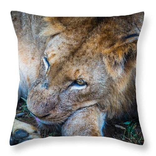 Sleep Throw Pillow featuring the photograph A King's Slumber by Andrew Matwijec