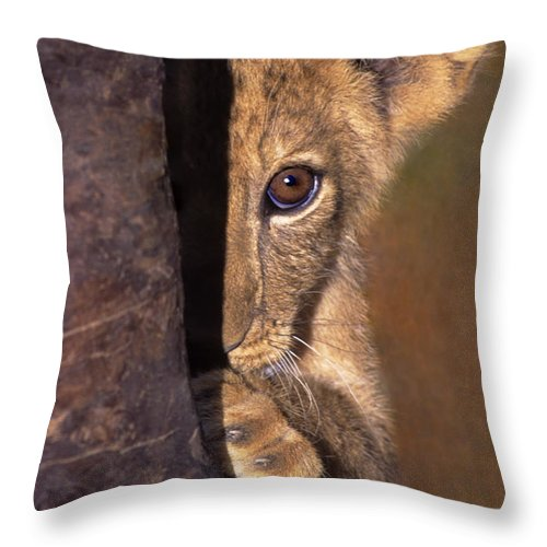 African Lion Throw Pillow featuring the photograph A Lion Cub Plays Hide And Seek Wildlife Rescue by Dave Welling