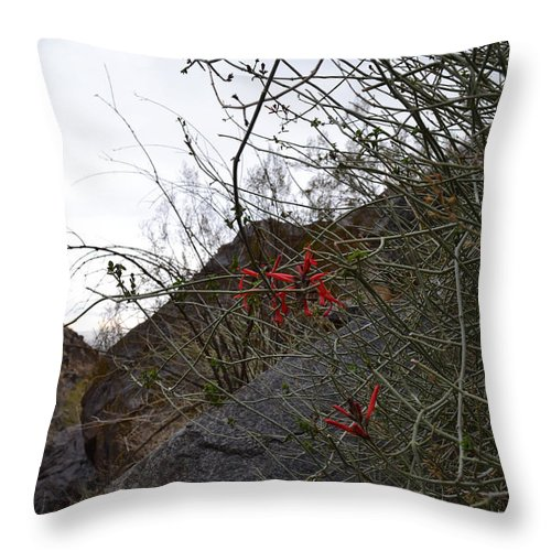 Landscape Throw Pillow featuring the photograph A Little Bit Of Red by Ross Jamison