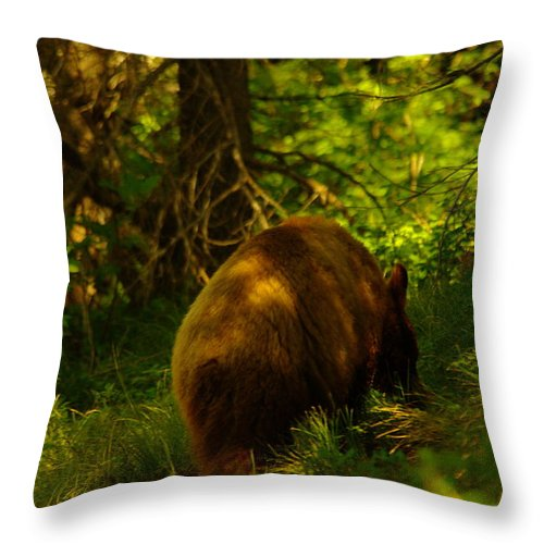 Bear Throw Pillow featuring the photograph A Little Brown Bear by Jeff Swan