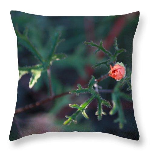 Flower Throw Pillow featuring the photograph A Little Peach Flower Bud by Phyllis Bradd