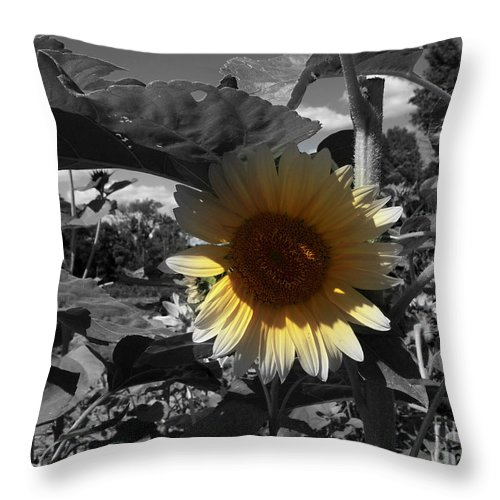 Sunflowers Throw Pillow featuring the photograph A Lone Sunflower In The Shade by Deborah Fay