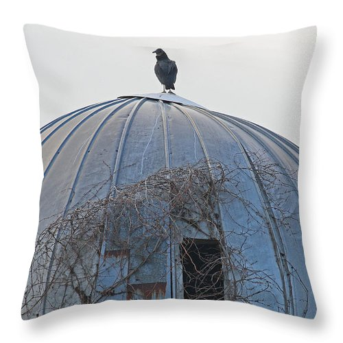 Vulture Throw Pillow featuring the photograph A Metaphor For Something By Ami Shecter by Paulinskill River Photography