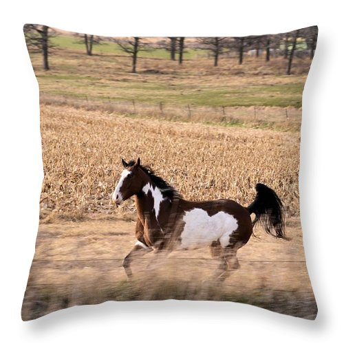 Horse Throw Pillow featuring the photograph A Moment Of Freedom by Bonfire Photography