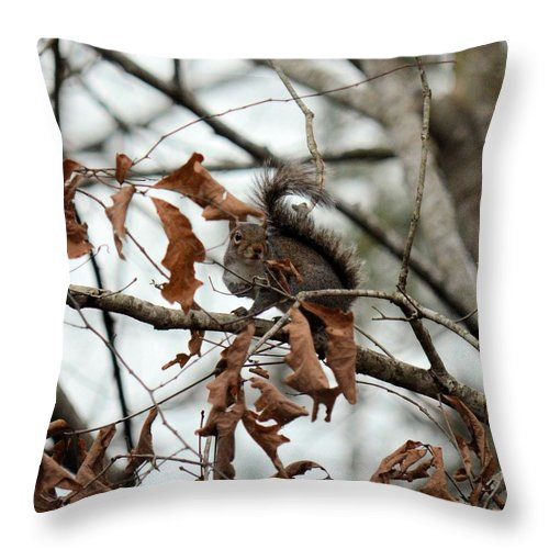 A Moment's Glance Throw Pillow featuring the photograph A Moment's Glance by Maria Urso