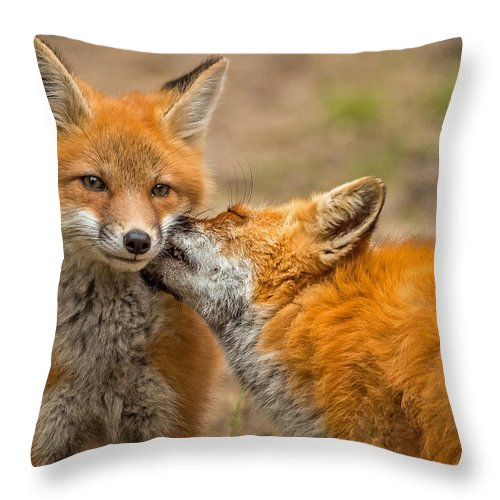 Fox Throw Pillow featuring the photograph A Mother's Love by Steve Dunsford