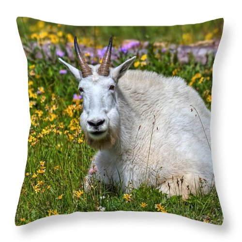 Glacier National Park Throw Pillow featuring the photograph A Mouthful Of Flowers by James Anderson
