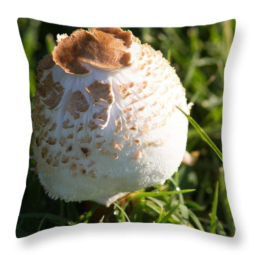1 Large Mushroom Throw Pillow featuring the photograph A Mushroom by Brian Williamson
