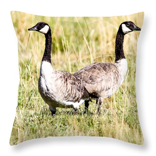 Geese Throw Pillow featuring the photograph A Pair Of Honkers by Brian Williamson