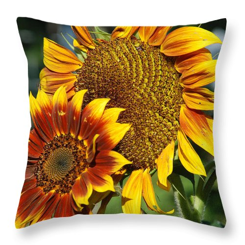 Flowers; Wild Flowers; Sunflowers; Sunflower; Yellow; Gold; Throw Pillow featuring the photograph A Pair Of Sunflowers No.1 by Janice Adomeit