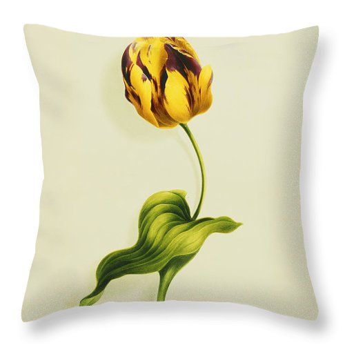 Biology Throw Pillow featuring the painting A Parrot Tulip by James Holland