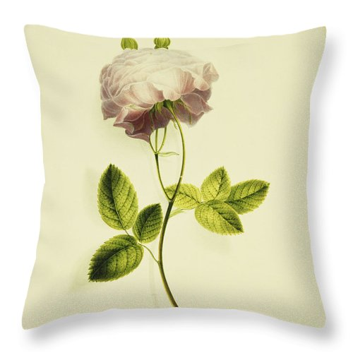 Biology Throw Pillow featuring the painting A Pink Rose by James Holland