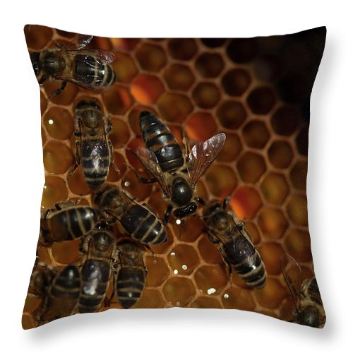 Worker Bees Throw Pillow featuring the photograph A Queen Bee Walks In The Center by Chico Sanchez