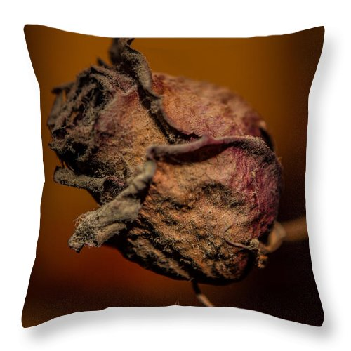 Rose Throw Pillow featuring the photograph A Rose By Any Other Name... by Charlie Duncan