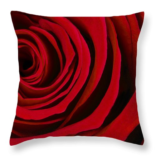 3scape Photos Throw Pillow featuring the photograph A Rose For Valentine's Day by Adam Romanowicz