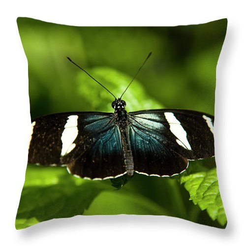 Antennas Throw Pillow featuring the photograph A Sara Longwing Butterfly Heliconius by Henry Georgi