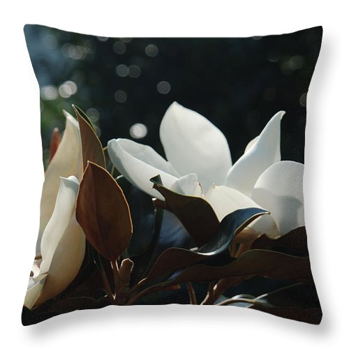 Magnolia Throw Pillow featuring the photograph A Sea of Magnolias by Suzanne Gaff