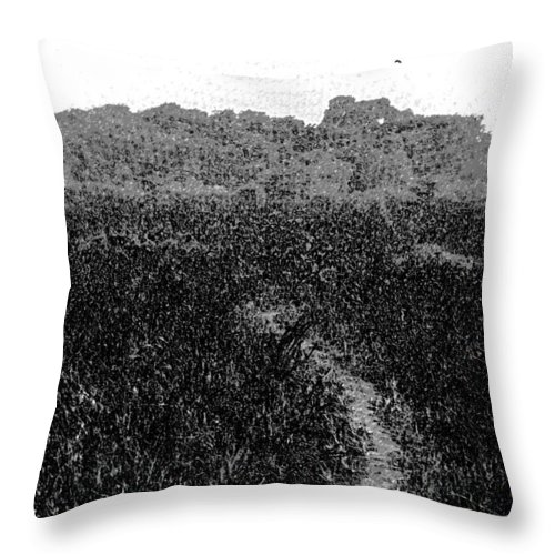 Bird Sanctuary Throw Pillow featuring the digital art A Small Path Through Very Tall Grass Inside The Okhla Bird Sanctuary by Ashish Agarwal