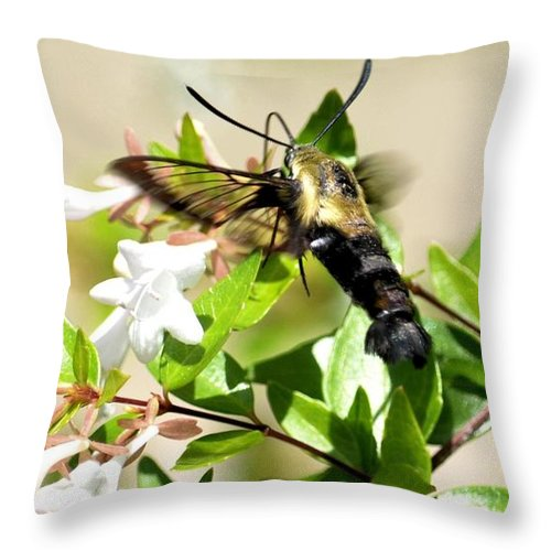 Sphinx Throw Pillow featuring the photograph A Sphinx's Pollination by Maria Urso