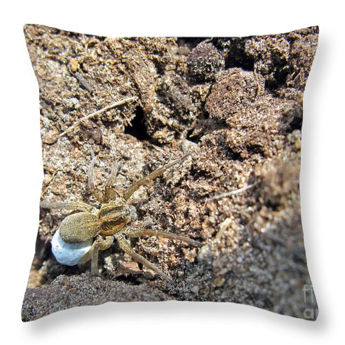 Nature Throw Pillow featuring the photograph A Spider With The Egg Sack by Ausra Huntington nee Paulauskaite
