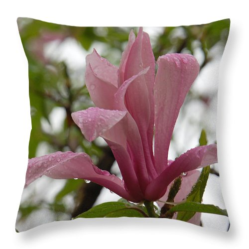 Magnolia Soulangeana Throw Pillow featuring the photograph A Steady Rain by Suzanne Gaff