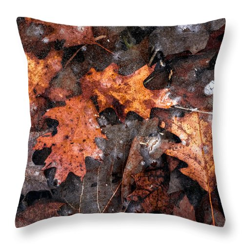 Leaves Throw Pillow featuring the photograph A Study In Brown by Cole Scott