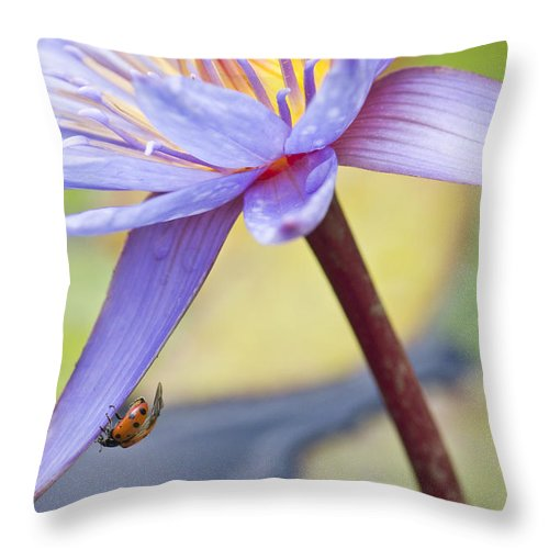Ladybug Throw Pillow featuring the photograph A Visiting Lady by Priya Ghose