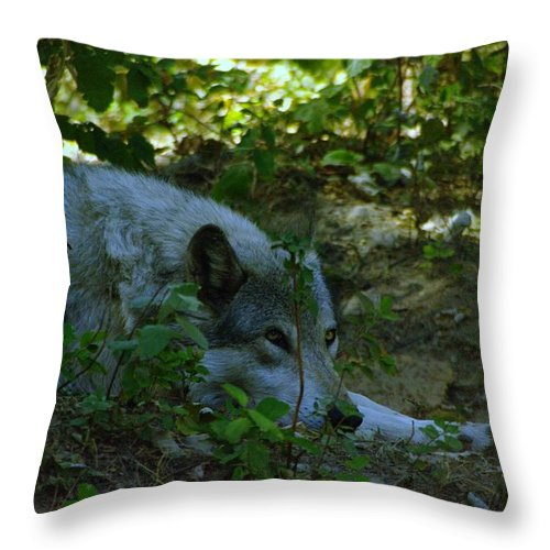 Wolf Throw Pillow featuring the photograph A Wolf Naps by Jeff Swan
