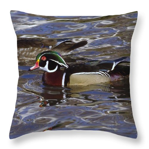 Ducks Throw Pillow featuring the photograph A Wood Duck Pair by Jeff Swan