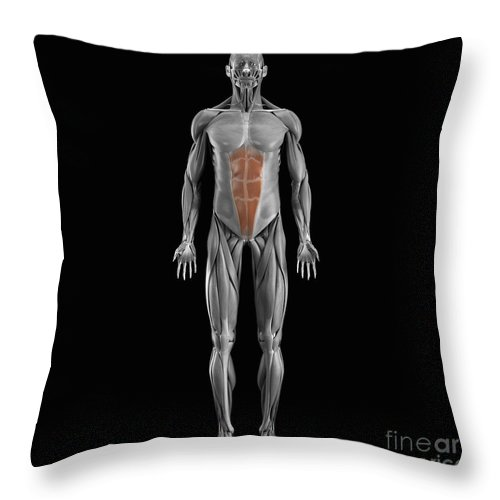 Full View Throw Pillow featuring the photograph Abdominal Muscles by Science Picture Co