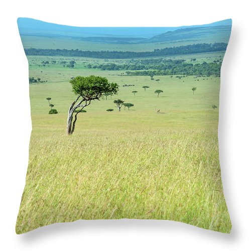 Scenics Throw Pillow featuring the photograph Acacia In The Green Plains Of Masai Mara by Guenterguni