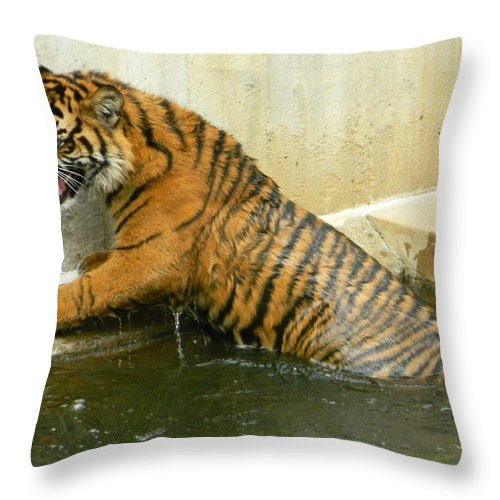 Tigers Photographs Throw Pillow featuring the photograph Accidental Dip by Emmy Vickers