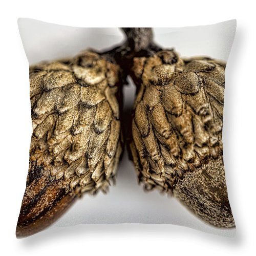 Acorns Throw Pillow featuring the photograph Acorns by John Crothers