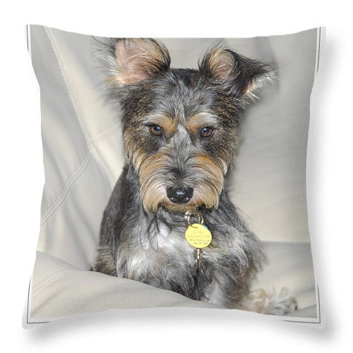 Throw Pillow featuring the photograph Adopted by Dyle  Warren