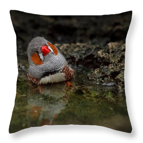 Adorable Zebra Finch Taking A Bath Throw Pillow For Sale By Eti Reid