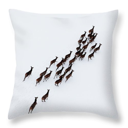 Scenics Throw Pillow featuring the photograph Aerial Photo Of A Herd Of Deer Running by Dariuszpa