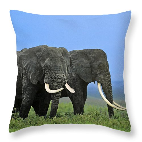 Africa Throw Pillow featuring the photograph African Bull Elephants In Rain Endangered Species Tanzania by Dave Welling