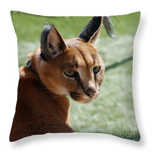 Big Cats Throw Pillow featuring the photograph African Caracal Lynx by Susan Garren