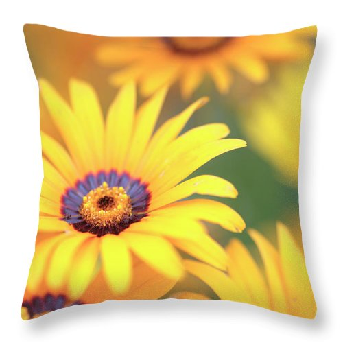 African Daisy Throw Pillow featuring the photograph African Daisy by Neil Overy