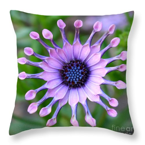 Daisy Throw Pillow featuring the photograph African Daisy - Square Format by Carol Groenen