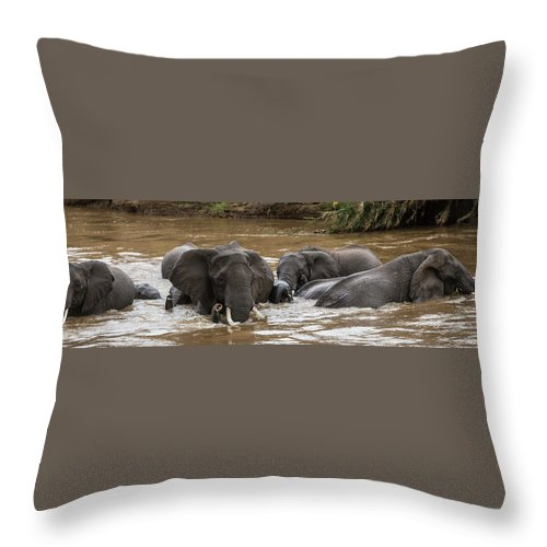 Kenya Throw Pillow featuring the photograph African Elephants Having A Bath In Mara by Manoj Shah