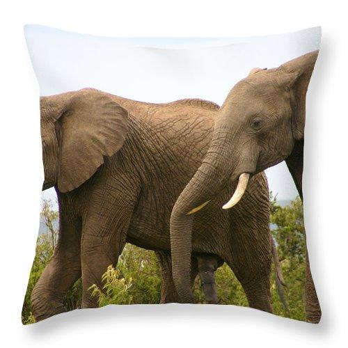 Elephant Throw Pillow featuring the photograph African Elephants by Menachem Ganon