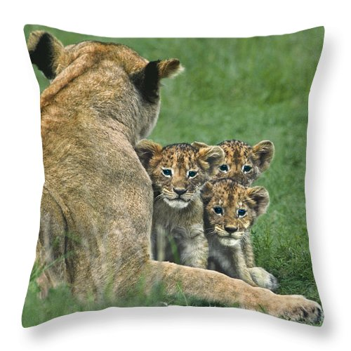 Africa Throw Pillow featuring the photograph African Lion Cubs Study The Photographer Tanzania by Dave Welling
