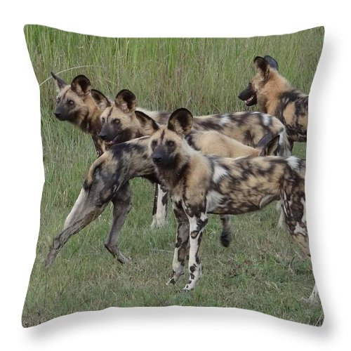Wild Dogs Throw Pillow featuring the photograph African Painted Hunting Dogs by Bruce W Krucke