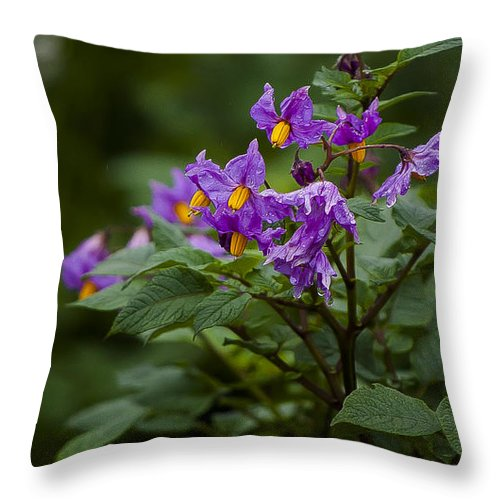 Rwanda Throw Pillow featuring the photograph African Violets by Paul Weaver