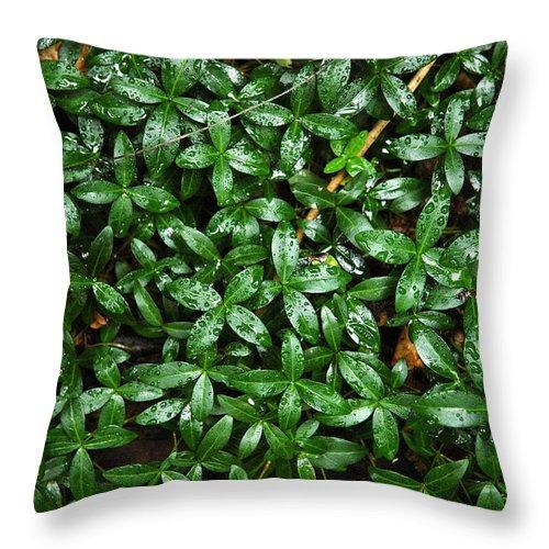 Garden Throw Pillow featuring the photograph After A Rain by Steve Cost