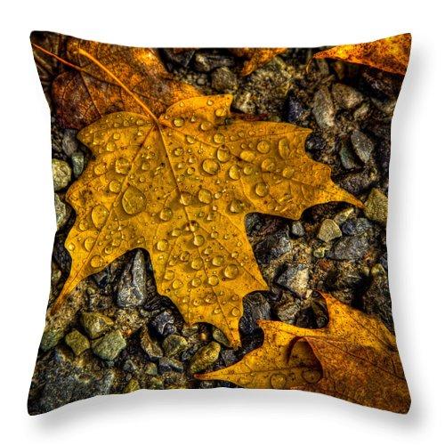 After An Autumn Rain Throw Pillow featuring the photograph After An Autumn Rain by David Patterson