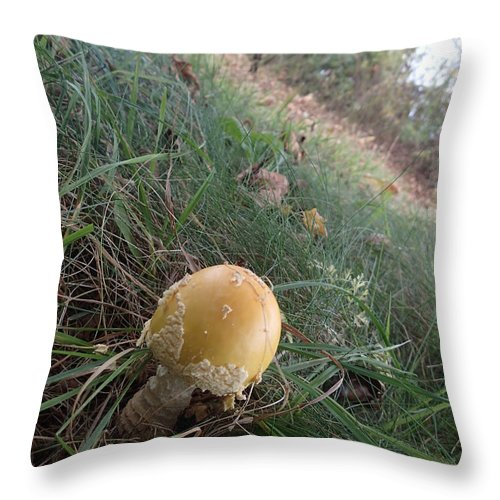 Mushroom Throw Pillow featuring the photograph After The Rain by Robert Nickologianis